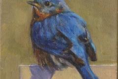 8542-BLUEBIRD-1