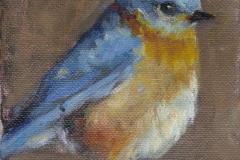 8542-BLUEBIRD-2