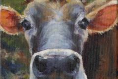8781-COW-2