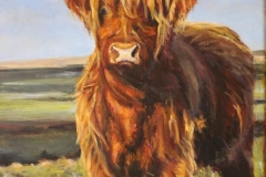 Highland-Cow-12x16