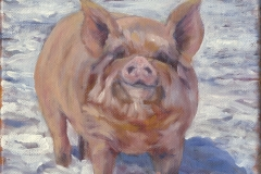 8542-PIG-IN-SNOW-4