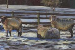 8781-SHEEP-2