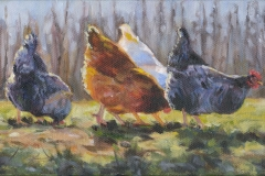 9019-Chickens-in-the-Sun-3