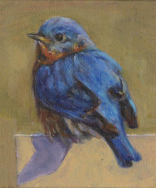 8542-BLUEBIRD-1.jpg